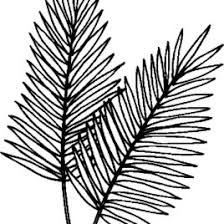 coloring page of palm leaf kids drawing and coloring pages