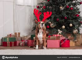 beagle with toy antlers and christmas gifts u2014 stock photo