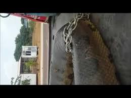 vidio film ular anaconda gotho spione