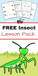 428 best insect насекомые images on pinterest preschool themes