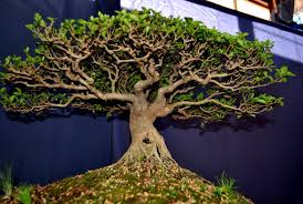 meaning of bonsai tree in home decor and design