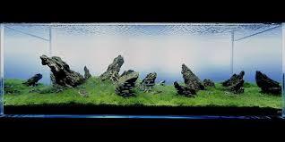 Best Substrate For Aquascaping Aquatic Eden Aquascaping Aquarium Blog