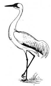 bird coloring page crane bird coloring page bing images decorating ideas