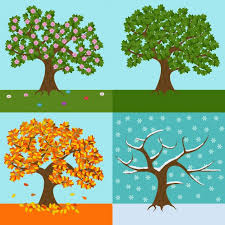 a tree of each season design vector free