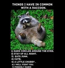Racoon Meme - that moment you realize you re a raccoon memes pinterest