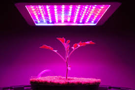 what type of lighting is best for a kitchen the best grow light options for indoor plants bob vila