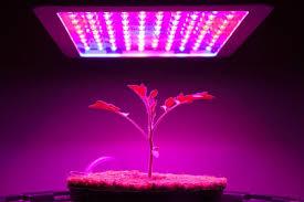 what is the best lighting for growing indoor the best grow light options for indoor plants bob vila
