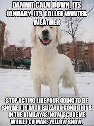 Funny Snow Memes - snow dog meme funny pinterest snow dogs meme and memes