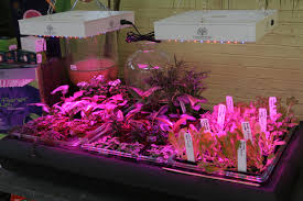 shop light for growing plants indoor garden led grow lights growing vegetables indoors the gateway