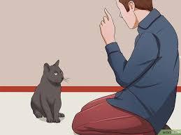 gerüche die katzen nicht mö einer katze das möbelkratzen abgewöhnen wikihow