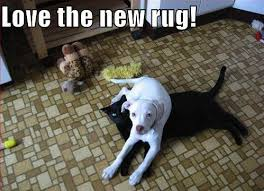 Funny Area Rugs 40 Best Area Rug Cleaning Images On Pinterest Rug Cleaning Area