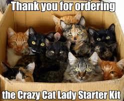 Crazy Lady Meme - the crazy cat lady starter kit starter packs know your meme