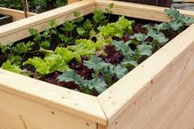 tips for planting a raised bed vegetable garden personal organic