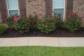 Bushes For Landscaping Gallery Pics For Landscaping Bushes Auto Auctions Info And