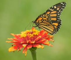 native plants for butterfly gardening benton soil u0026 water prairie rose u0027s garden
