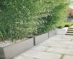 pflanzen als sichtschutz fã r balkon gartenzaun sichtschutz pflanzen treefunder co