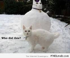 Snowman Meme - 35 cat snowman meme pmslweb