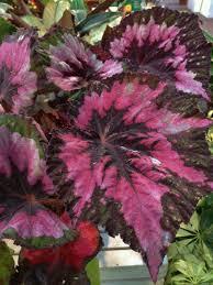 20 best house plants low light images on pinterest house plants
