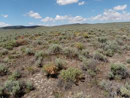 Wyoming vegetaion images Rem 460 JPG