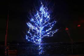 blue outdoor lights ideas for trees contemporary
