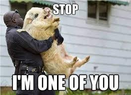Squirrel Meme - squirrel memes 15 wishmeme