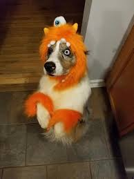 56 best 2016 nutri vet halloween pet costume contest images on