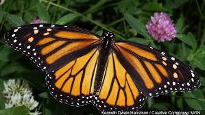 columbia mo creates sanctuary for migratory monarch butterflies