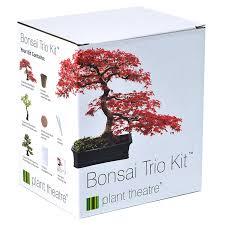 bonsai australian native plants plant theatre bonsai trio kit 3 distinctive bonsai trees to grow