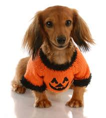 Mini Dachshund Halloween Costumes Education Pet Owners Archives Red Bank Veterinary Hospital Blog