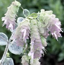 What Are The Gardening Zones - 105 best garden zone 6 perennials images on pinterest flower