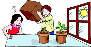 how does light affect plant growth teaching plant biology to kids iii hubpages
