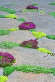 13 best creeping thyme images on gardens garden