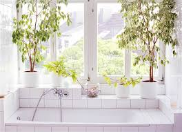 Bathroom Flowers And Plants 3 Benefits Of Bathroom And Shower Plants Today Com