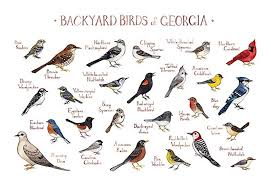 Georgia Birds images Backyard birds of georgia field guide art print handmade jpg