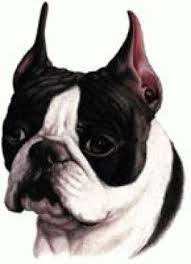 boston cremation decorative plate dogs boston terrier dog cat urns