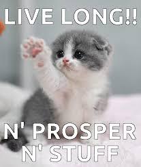 Good Luck Cat Meme - i iz vulcan cat see ma ears cats cats cats pinterest cat