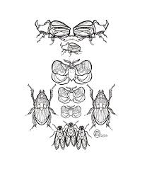 insect tattoo art and designs page 33