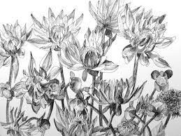 pastels and pencils flower drawings and botanical drawings in