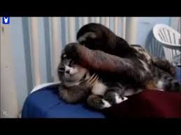 Sloth Whisper Meme - rapey sloth youtube