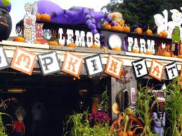 eleven adorable spots to go pumpkin picking in the bay area