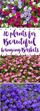 Hanging Plants For Patio Best 25 Hanging Baskets Ideas On Pinterest Hanging Flower