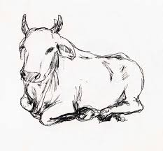 indian cow arihoma u0027s illustration blog