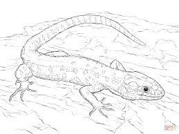 Drawn Reptile Yellow Spotted Pencil And In Color Drawn Reptile Reptile Coloring Pages