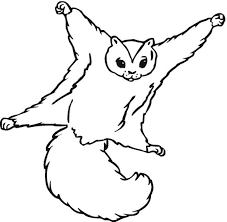 flying squirrel clipart 19