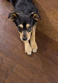 pet peeves preventing and repairing pet damage to hardwood floors