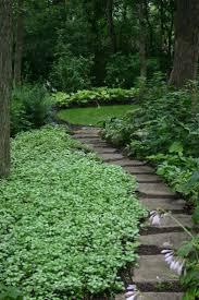 friends of peacehaven botanic park inc new members new plants 103 best garden ideas images on pinterest plants garden ideas