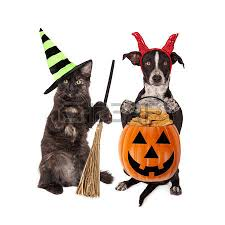 Yorkie Halloween Costumes Halloween Dog Images U0026 Stock Pictures Royalty Free Halloween Dog