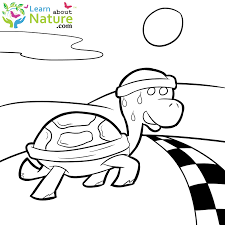 learn nature turtles coloring learn nature