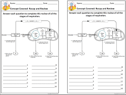 Cell Reproduction Concept Map Answers Amy Brown Science Biology Interactive Notebooks