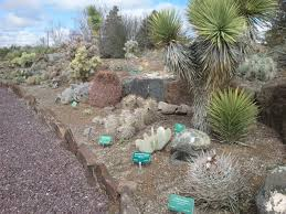 native drought tolerant plants drought tolerant plants an introduction u2013 awkward botany